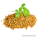 Fenugreek Powder