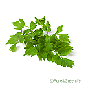 Lovage Root Powder