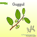 Guggul Extract Powder